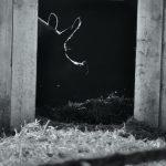GUNDA (Victor Kossakovsky) La fattoria degli animali